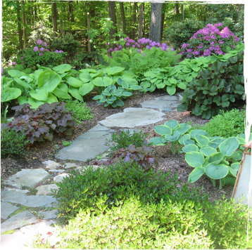 Natural stone path into a wooded area with ground cover and trees