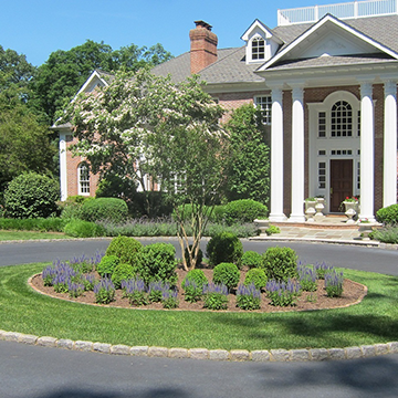 Circle driveway with lush grass and mulched area surrounding a tree in front of a stately front entrance