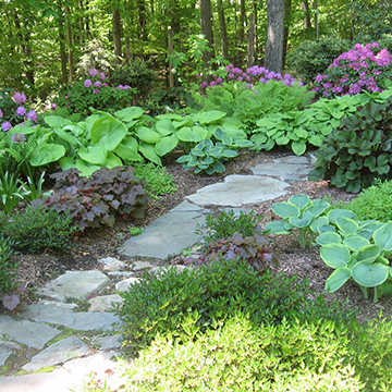 Field stone path leading into a variety of plants and flowers in a wooded area.