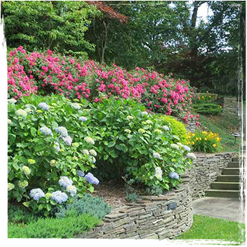 Stone retaining wall with pink and white flowering bushes.