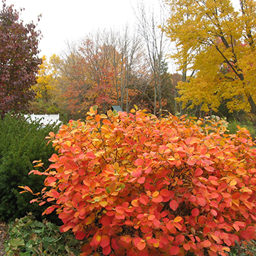 Fall foliage with bright orange bush in the foreground